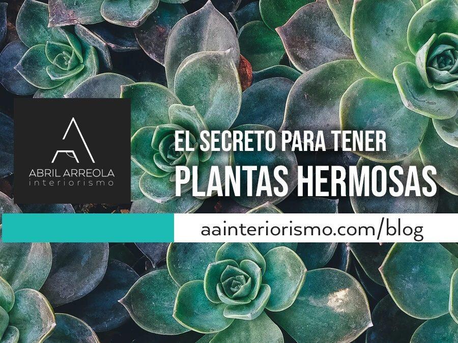 cuidados de plantas en diseño interior